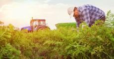 seguro para trabajadores rurales